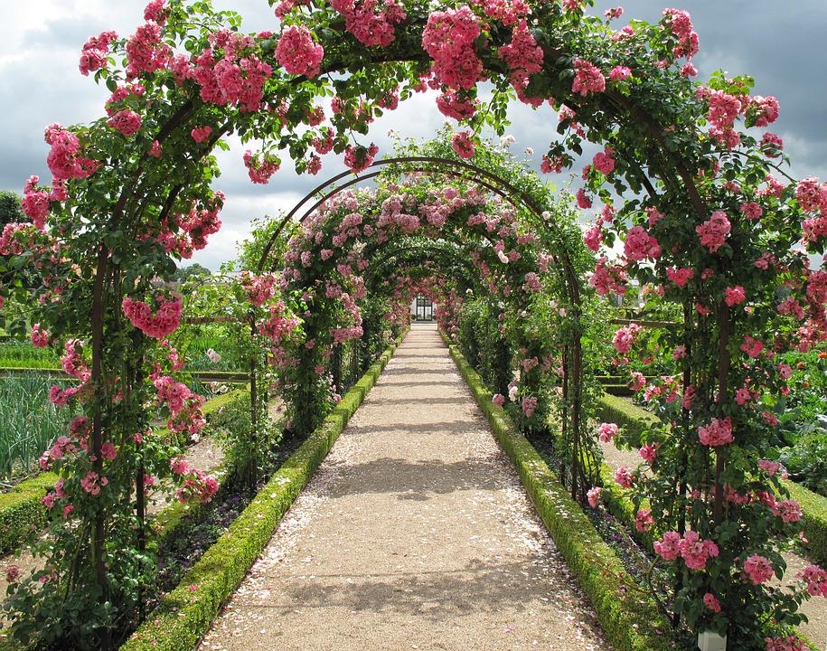 Gravel path through a rose garden.